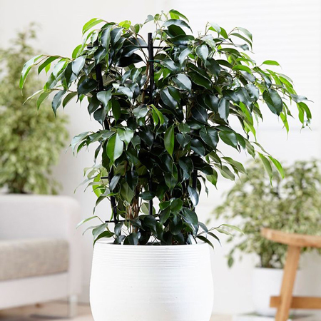 گیاهان