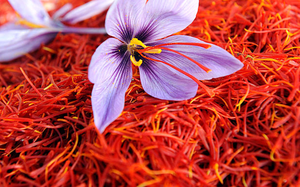 درمان بیماری ها با زعفران و زنجبیل