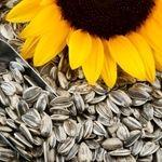 مهمترین خواص دانه ی آفتابگردان