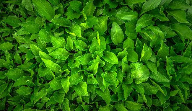 گیاه درمانی چیست؟