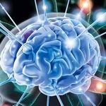 بهترین ماده برای تغذیه سلول های مغزی چیست؟