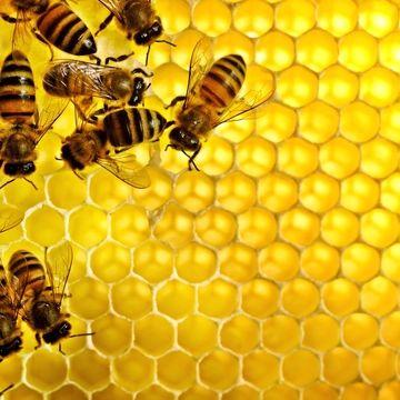 تاثیر شگفت انگیز عسل بر کبد و کلیه