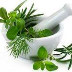 تقویت مو با داروهای گیاهی(۲)