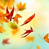 مهمترین نکات مراقبت از پوست در طول فصل پاییز