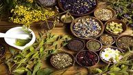 10 گیاه با خواص دارویی که هر شخص باید آن را در خانه خود داشته باشد