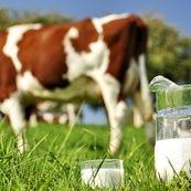 شیر خام یا فرآوری شده؟