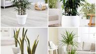 تاثیر شگفت انگیز گیاهان در تصفیه هوا