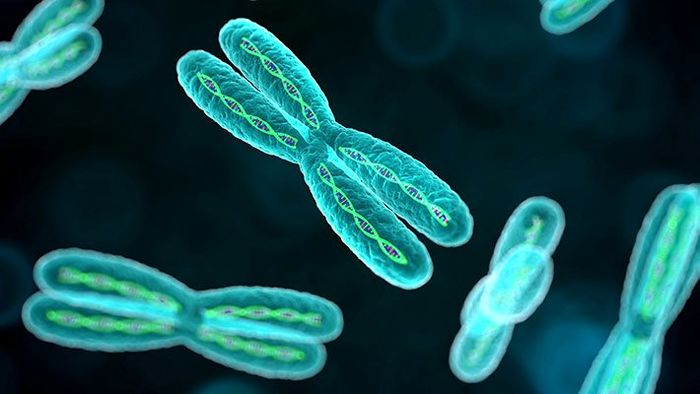 کروموزوم  و ساختمان آن