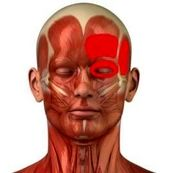 تأثیر مصرف اُمگا در افزایش ایمنی بدن